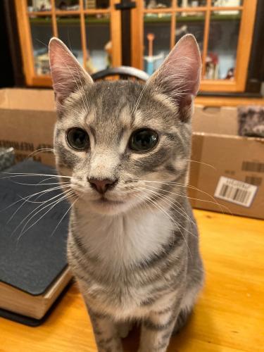 Lost Male Cat last seen Harpersville Rd., Newport News, VA 23601