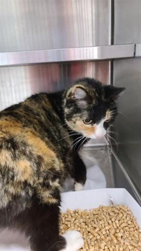 Shelter Stray Male Cat last seen Tulsa, OK 74112, Burlington, NC 27216
