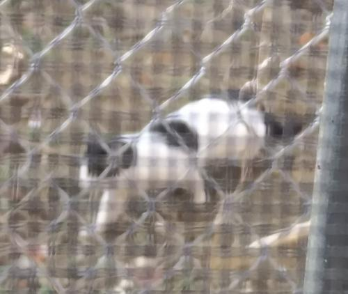 Found/Stray Unknown Cat last seen Westminster & 40th, Philadelphia, PA 19104