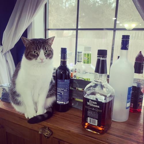 Lost Female Cat last seen Ambassador, ole colony rd, west gate , Lafayette, LA 70506