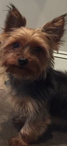 Lost Male Dog last seen Fox Hollow Court , Middleburg Heights, OH 44130