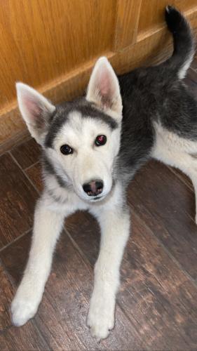 Found/Stray Female Dog last seen Maple and sunset st. , Hesperia, CA 92345