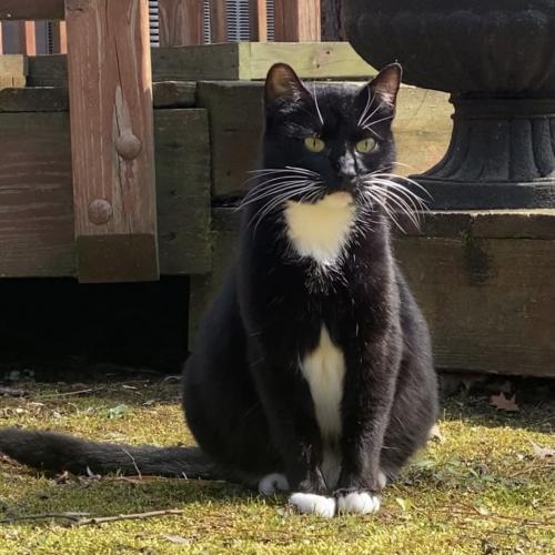 Found/Stray Female Cat last seen Sunnybrook Ln & Kings Grant Rd, Virginia Beach, VA 23452