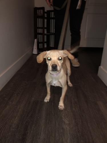 Found/Stray Female Dog last seen St Luke's hospital, Tempe, AZ 85281
