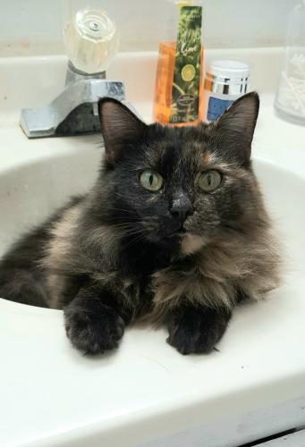 Lost Female Cat last seen Hwy 32 and county road E, Morgan, WI 54154