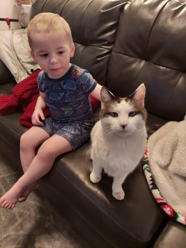 Lost Female Cat last seen Lindsay and riggs sun groves, Chandler, AZ 85249