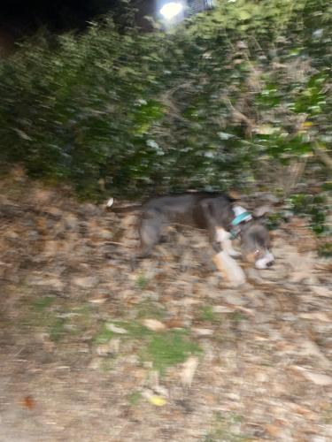 Found/Stray Male Dog last seen Near element apartments , Norfolk, VA 23505