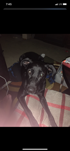 Lost Male Dog last seen University & Baird, Green Bay, WI 54302
