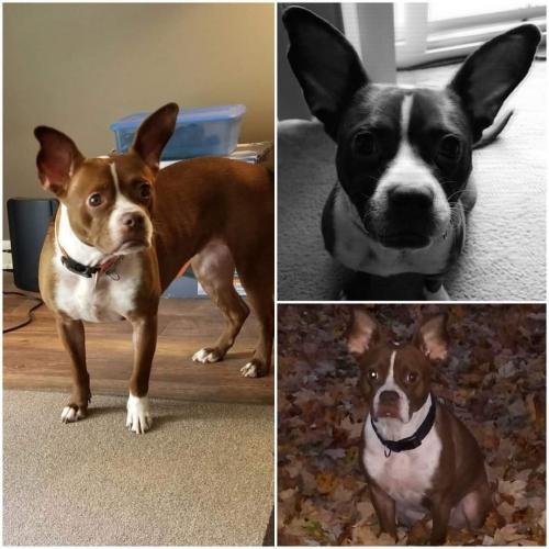 Lost Female Dog last seen Free Pike and Geis Rd, Dayton, OH 45416