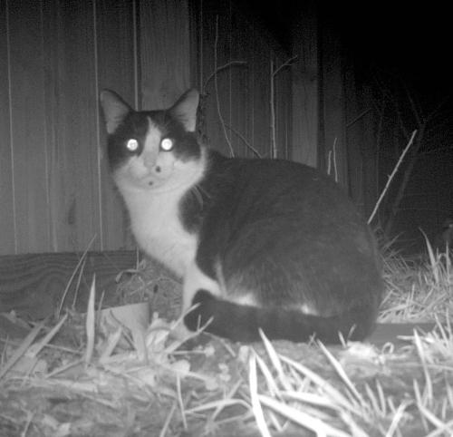 Found/Stray Unknown Cat last seen Reseca La and Hall St, West Springfield, VA 22152
