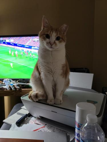 Lost Male Cat last seen Near 34th st , NO BRENTWOOD, MD 20722