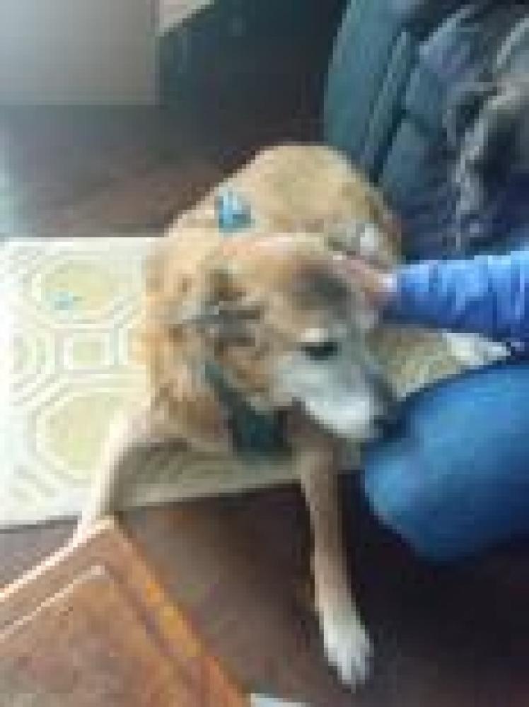 Shelter Stray Unknown Dog last seen Herndon, VA 20170, Fairfax, VA 22032