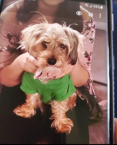 Lost Male Dog last seen Near wesy alex bell rd,moraine ohio 45459, Moraine, OH 45459