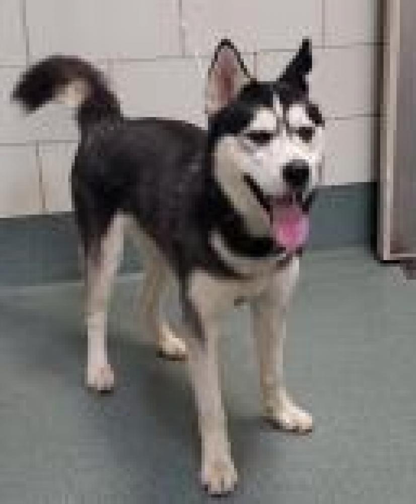 Shelter Stray Male Dog last seen Lee, VA , Fairfax, VA 22032