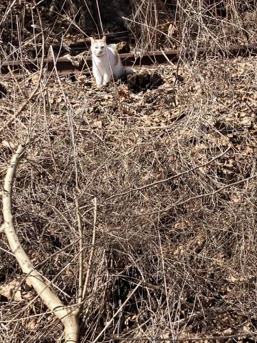 Found/Stray Female Cat last seen Capital Crescent trail by river road and westbard, Bethesda, MD 20816