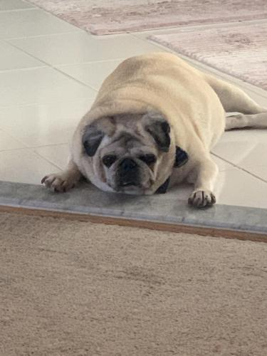 Lost Male Dog last seen Bush hill , Rose Hill, VA 22310