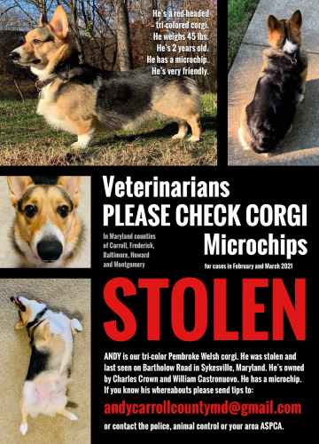 Lost Male Dog last seen Bartholow Road, Sykesville, Maryland, Eldersburg, MD 21784