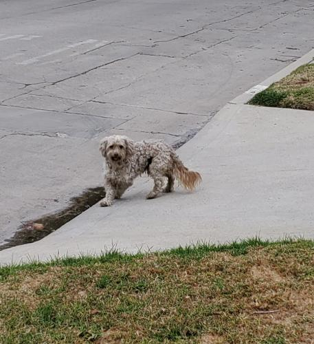 Found/Stray Unknown Dog last seen 9th St & Cloverdale Ave, Los Angeles, CA 90036
