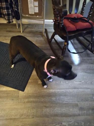 Lost Female Dog last seen Near rd street by general dollars store Dayton Ohio 45417, Dayton, OH 45403