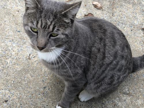 Lost Unknown Cat last seen Thalia Road and Virginia Beach Blvd, Virginia Beach, VA 23452