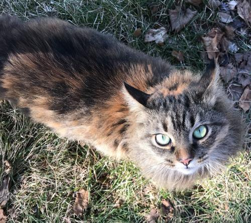 Lost Female Cat last seen Old National Pike, near Prospect St and 8th Alley, New Market, MD 21774