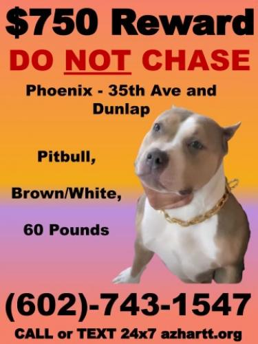Lost Female Dog last seen 39TH Ave and Dunlap, Cactus Wren neighborhood , Phoenix, AZ 85051