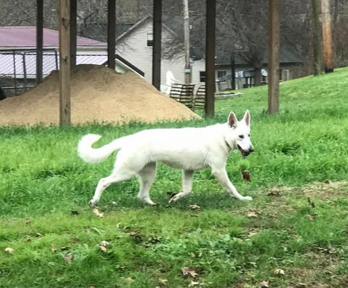 Lost Female Dog last seen Mahan Rd and N Elmtree Rd, Conover, OH 43072