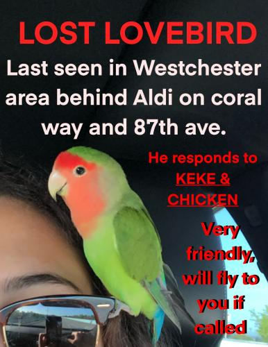 Lost Unknown Bird last seen 87th ave and 20th ter, Miami, FL 33155