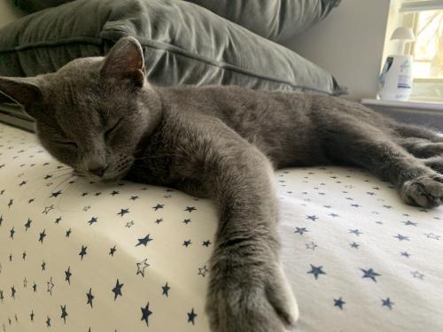 Found/Stray Female Cat last seen Braxfield Ct, Rockville , North Bethesda, MD 20852