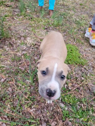 Found/Stray Female Dog last seen Near Sedgefield Dr, Norfolk, VA 23513