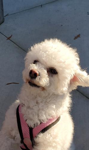 Lost Female Dog last seen Etheridge Rd and Stockleybridge, Chesapeake, VA 23322