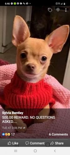 Lost Male Dog last seen Gulf Road. ELYRIA ohio.44035, Elyria, OH 44035