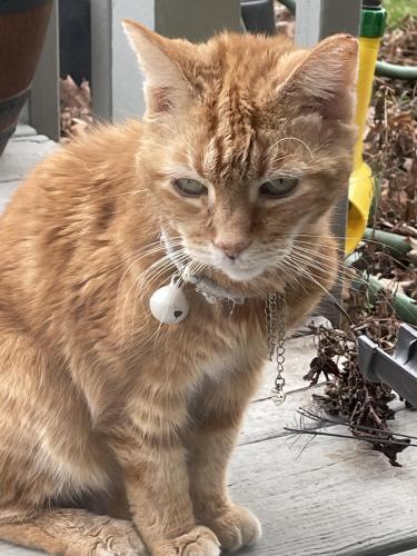 Found/Stray Unknown Cat last seen National & Bristol , Vandalia, OH 45377