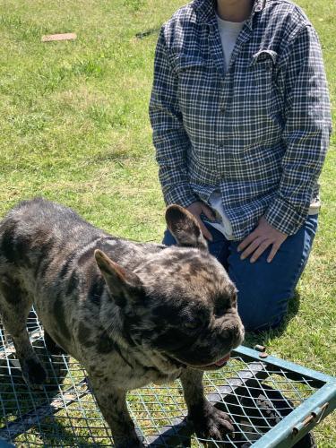 Lost Male Dog last seen Marshall ave, Newport News, VA 23607