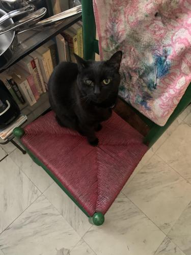 Lost Female Cat last seen Lee hwy and monroe st, Arlington, VA 22207