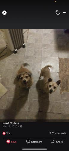 Lost Male Dog last seen Near deeds Avenue , Dayton, OH 45404