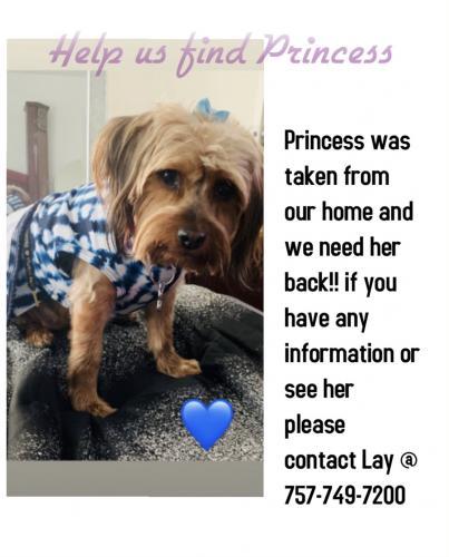 Lost Female Dog last seen Downtown Newport News , Newport News, VA 23607