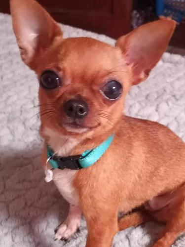 Lost Female Dog last seen N. Mulberry Street , Mansfield, OH 44903