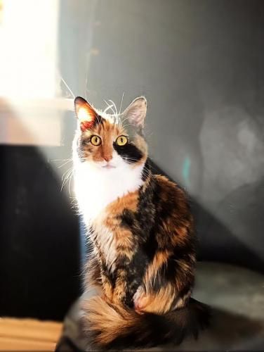 Lost Female Cat last seen Lynn dr, Fairborn, OH 45324