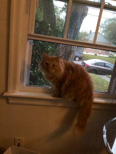 Lost Male Cat last seen Fox Hill and Mercury, Hampton, VA 23669