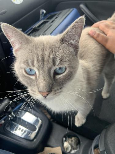 Found/Stray Unknown Cat last seen Holt and Easton Street , Dayton, OH 45402