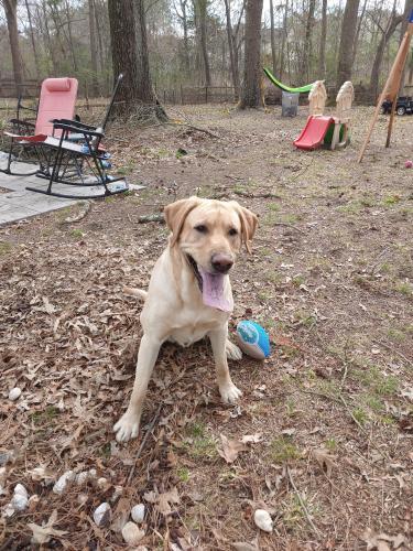 Found/Stray Male Dog last seen Bishop st, Chesapeake, VA 23323