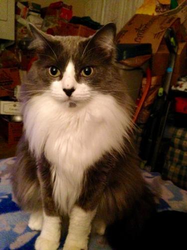 Lost Male Cat last seen Aragona / Clover , Virginia Beach, VA 23462