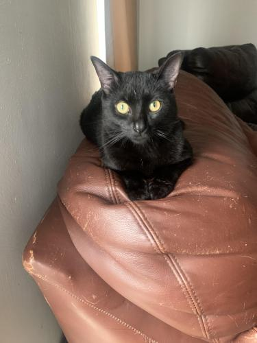 Lost Male Cat last seen Rush st and princess anne , Norfolk, VA 23502