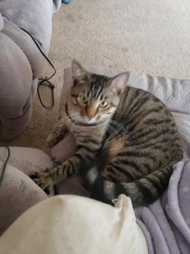 Lost Male Cat last seen Lynnhaven Parkway, Virginia Beach, VA 23452