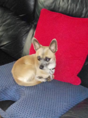 Lost Male Dog last seen Near colony drive se, conyers ga. 30013, Colony Dr SE, GA 30013