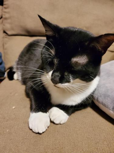 Lost Female Cat last seen Turtle rock rd, Chesapeake, VA 23320
