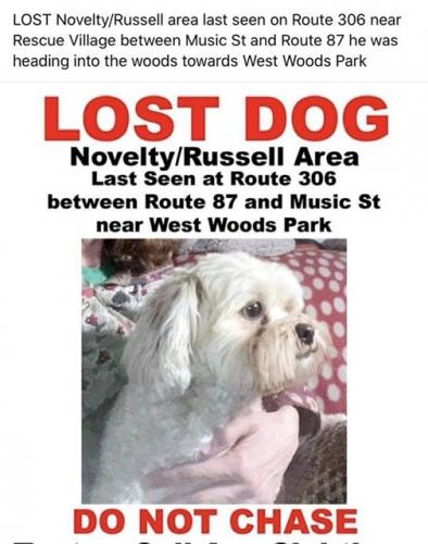 Lost Male Dog last seen Chillicothe(306) and 87 close to rescue village , Novelty, OH 44072
