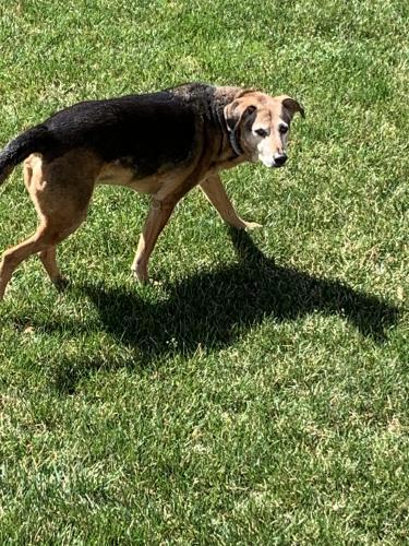 Found/Stray Unknown Dog last seen Hundred Acres Lane , Leesburg, VA 20175