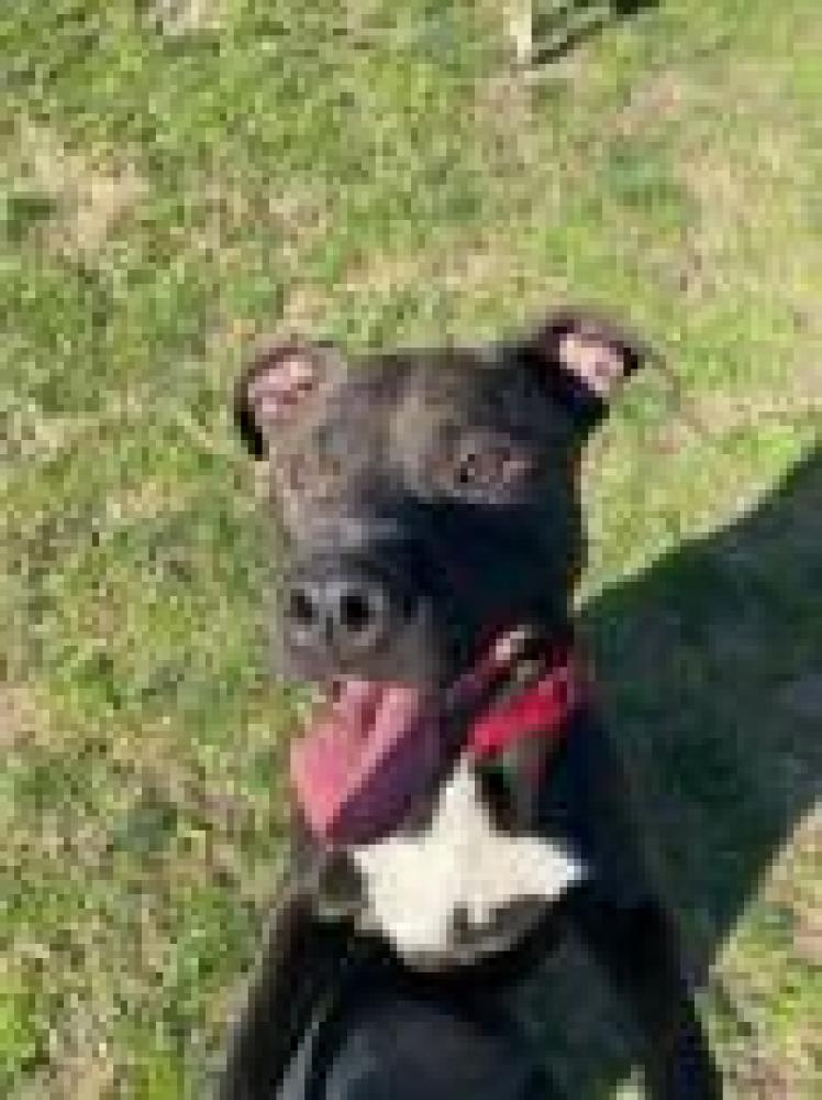 Shelter Stray Male Dog last seen Great Falls, VA 22066, Fairfax, VA 22032